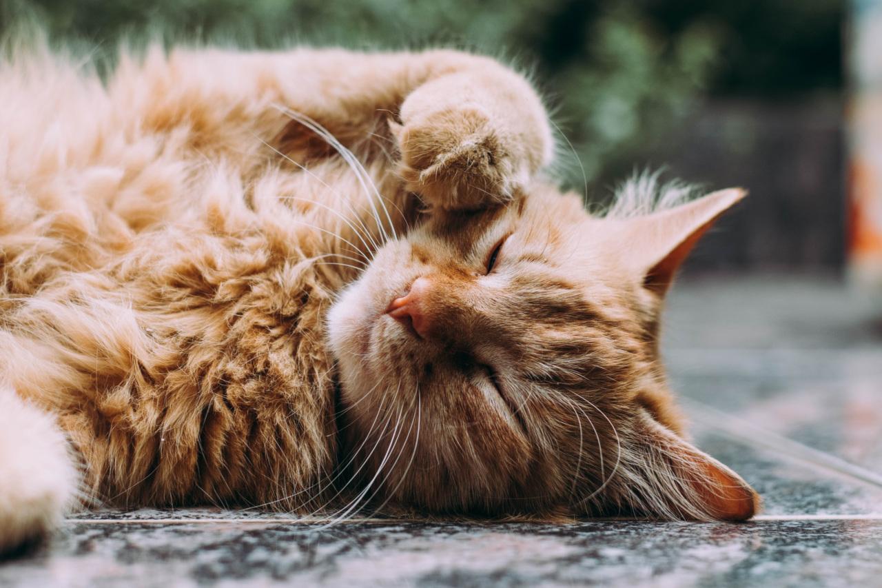Alergia na  sierść kota - badania kliniczne